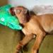 Nem írok kutya nekrológot, csak ha kutyául vagyok…
